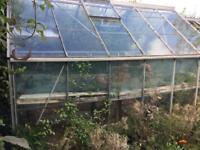 One (or two) metal-framed glass greenhouses