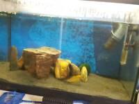 80l Aquarium Bargain Price with everything