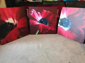 Next Red Flower Canvas Wall Pictures X3