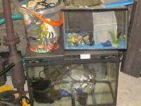 Fish Tanks and Equipment Love Fish Panorama 64