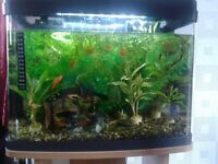 Small 40 litre Panorama Fish Tank and Stand with Accessories