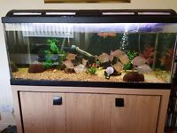 Fish tank with stand and all accessories with fish included.