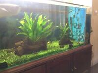Large fish tank and cabinet