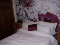 lovely rooms to rent in shared house