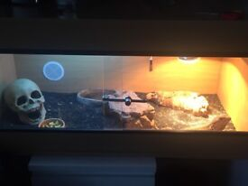 Complete Bearded Dragon Set Up