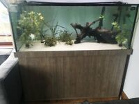 500l Aquarium - Custom built Tank and Stand - Immaculate.