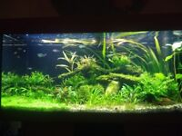 Juwel Rio 180L COMPLETE set up (Fish, tank, CO2, plants, shrimp, tools, everything you need!)