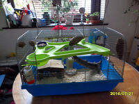 TWO BABY FEMALE BLACK MONGOLIAN GERBILS WITH CAGE