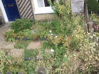 Need good garden condition at the end of tenancy? 100% Deposit back guarantee