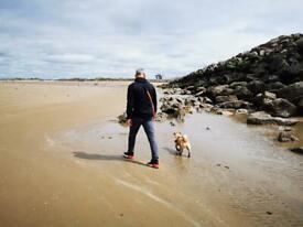 PROFESSIONAL DOG-WALKING and SITTING