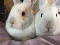 10 week old bunnies