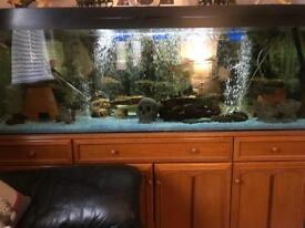 5 and 1/2 foot fish tank on stag unit full set up