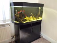 Juwel fish tank full set up