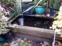 Garden Pond,freestanding plus accessories