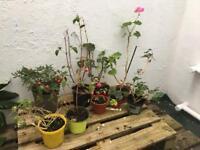 9 plants