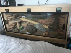 Leopard gecko and full setup for sale