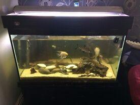 large heavy good quality fish tank