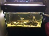 large heavy good quality fish tank