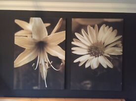 NEXT Flower Print Canvas Pictures