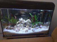Aquarium - AQUA ONE, External Filter, Stand & FISH. Fish tank