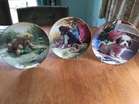 Decorative Puppy Plates Used x 8