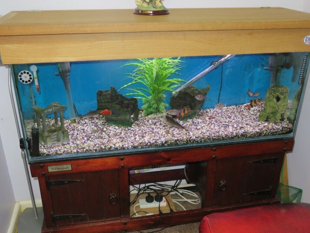 4 Ft Fish Tank On Da Woodcraft Wooden Stand Includes Tropical Fish In Radcliffe Manchester Gumtree