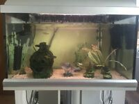 Fish tank & fish for sale