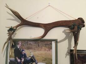 1 Red Deer and 2 sets of Roe Deer antlers