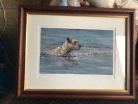 "Paul Doyle Limited Edition Framed Border Terrier Print- ""On reflection"""