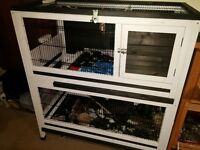 2 level Rabbit Hutch approx and two male Lop earred Rabbits. 9 months old neutered
