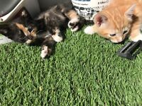 2 charming kittens for sale