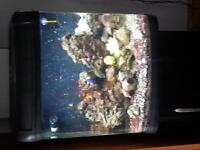 Kent Marine Tank with stand