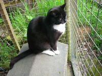 Very friendly Male Cat