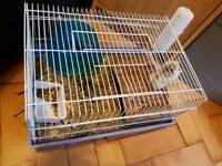 Free hamsters