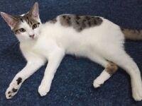 Friendly Male Kitten 6 months