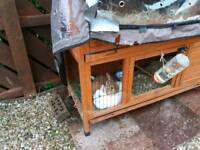 Rabbits and hutch free