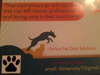 Pet & House Sitting Service