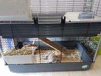 2 house rabbits including brand new cage and some food