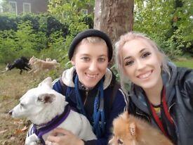 Professional dog walker & boarding & pet visits, primrose hill, regents park, London available 24/7