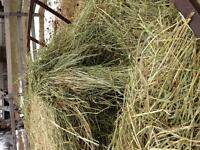 Looking for good quality round bales near Cobourg