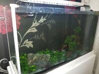 19L Fluval Spec Nano Fish Tank with DIY Stand