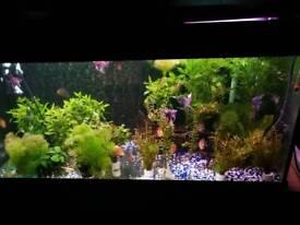 Aquarium aquatic plants