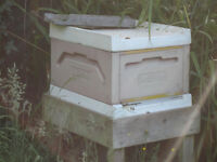 Langstroth Poly Beehive with Galtee Queen