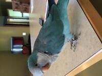 Blue Quaker Parrot and cage