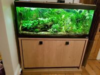 4ft fish tank Fluval Roma (240l) with stand, filter and heater