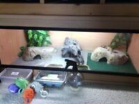 Geko female with full set up £70