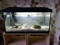 Marine fish tank setup