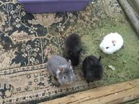 Beautiful 2 months old bunnies for sale