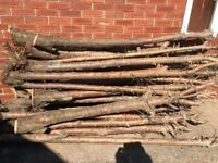 fire wood for log burner or craft work