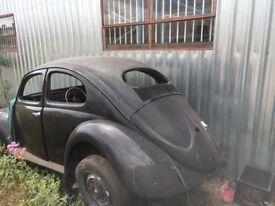 Oval window Vw beetle